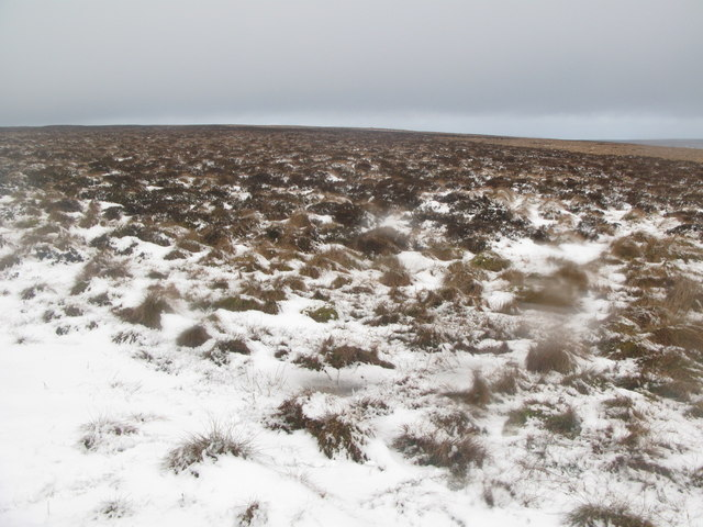 Wolfcleugh Common (3)