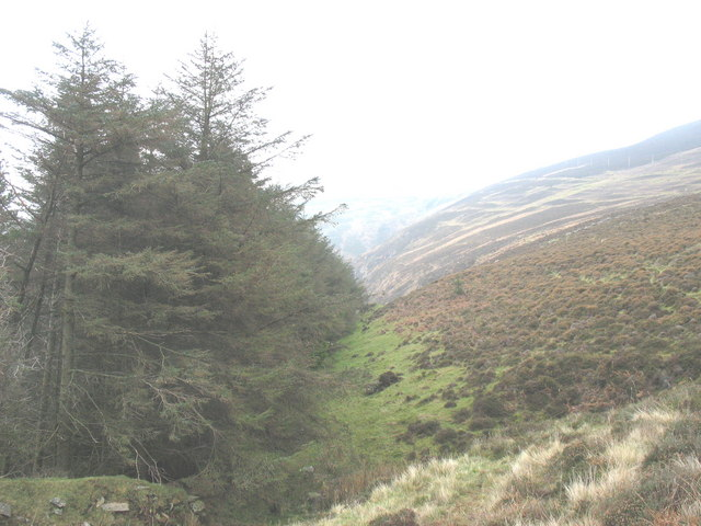 Forest-moorland boundary