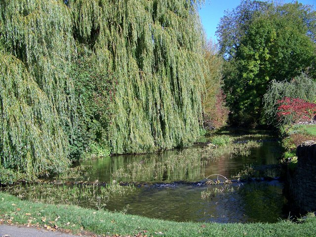 Willows over Brompton Beck, Brompton by Sawdon