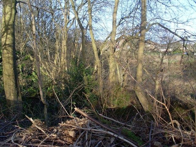 Woodland by Cochno Road
