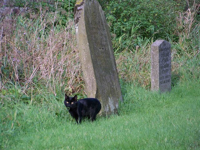 Gravestone and cat, St Mary and St Laurence, Rosedale Abbey