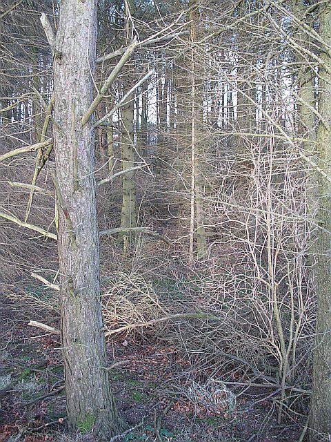 Castleton Strip