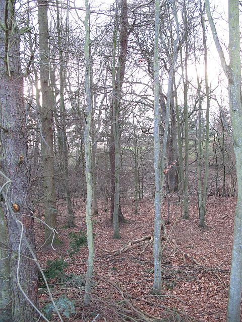 Woodland, Purvies Hill Burn