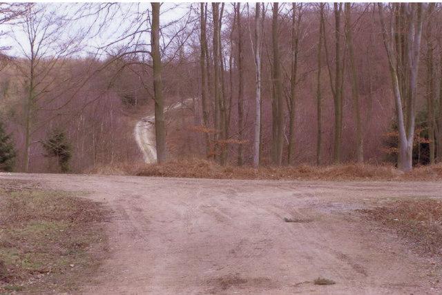 Crossroads in Kings Wood