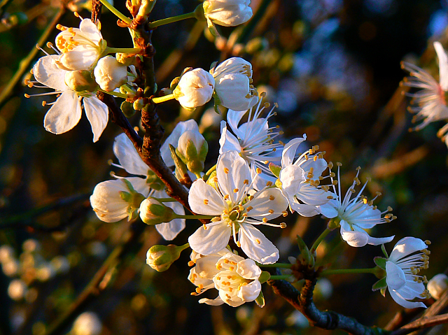 Flowers in a hedge near Faringdon Folly