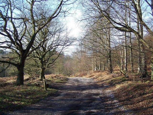 Near Wandon