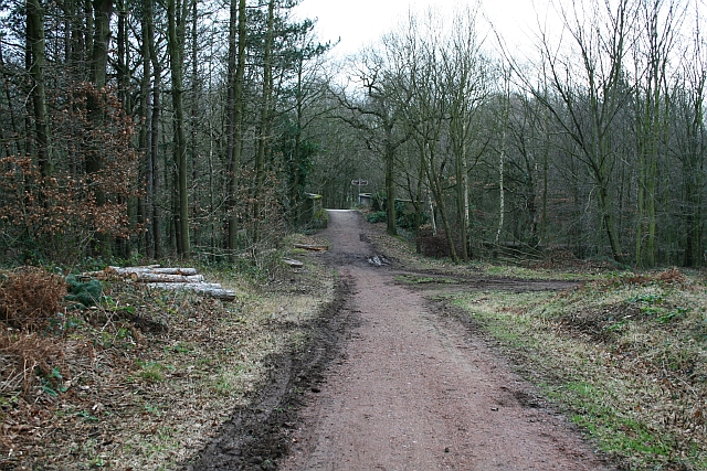 Track in Haw Park Wood
