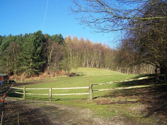 Pasture Near 'The Glen'