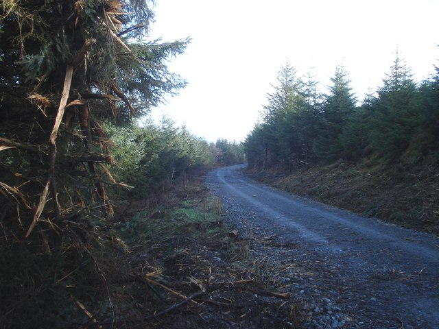 Forest track in Radnor Wood