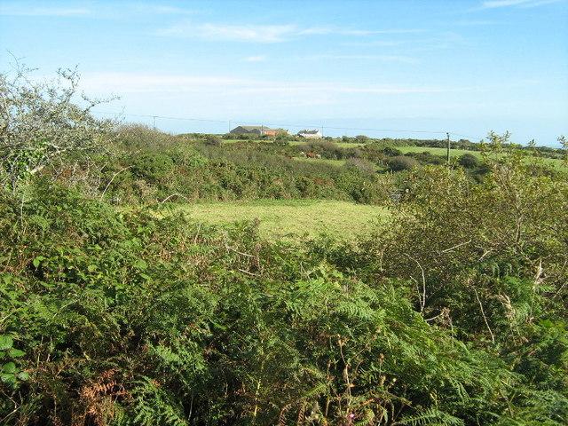 Hedges and fields near Trythall Farm