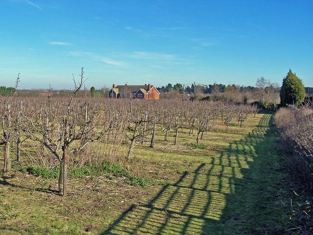 Orchard on Saxon Shore Way