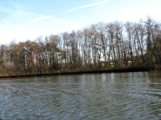 Tree-lined river bank