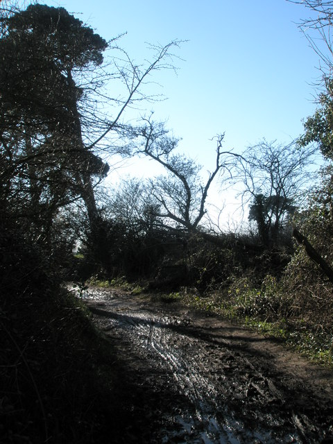Gloomy footpath at Warblington