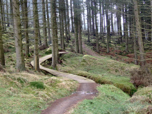 Mountainbiking trail in Kielder forest park