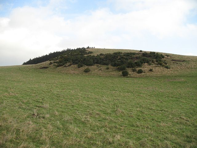 Whin covered hill, Easterton