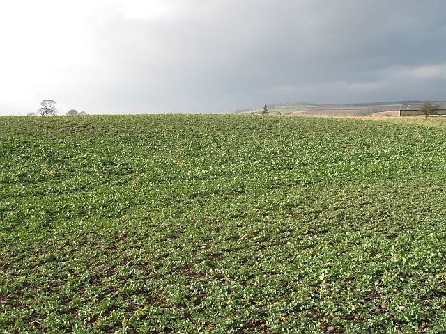 Arable land, Henhill