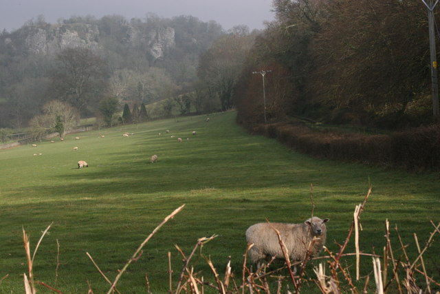 Chudleigh Rocks in the morning mist