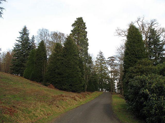 Woodland, Dupplin