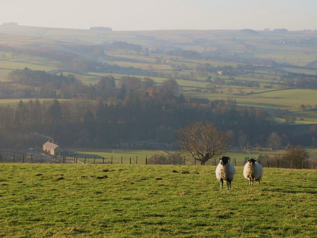 Pastures below Housty