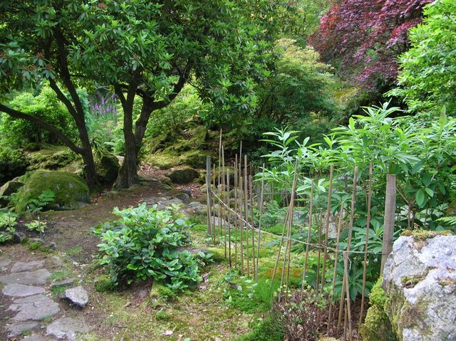 Japanese garden in Giggle Alley Woods, Eskdale Green