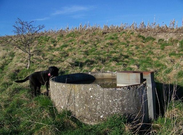 Concrete water trough near Fifield Bavant