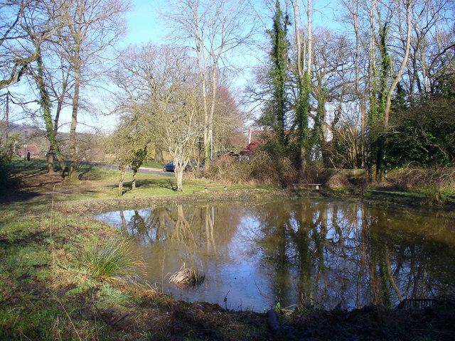 Pond, Grayswood