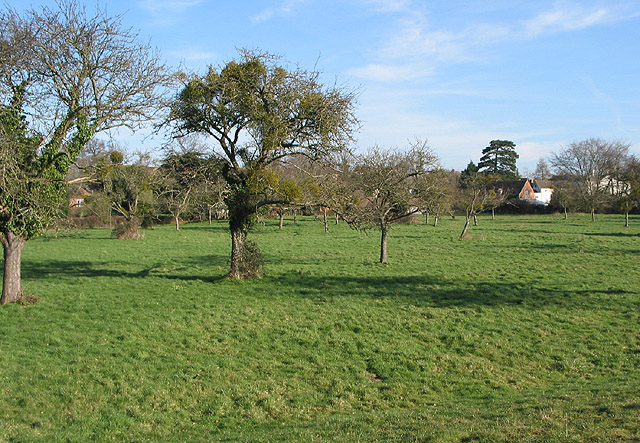 Small orchard next to St. Peter's Church, Minsterworth