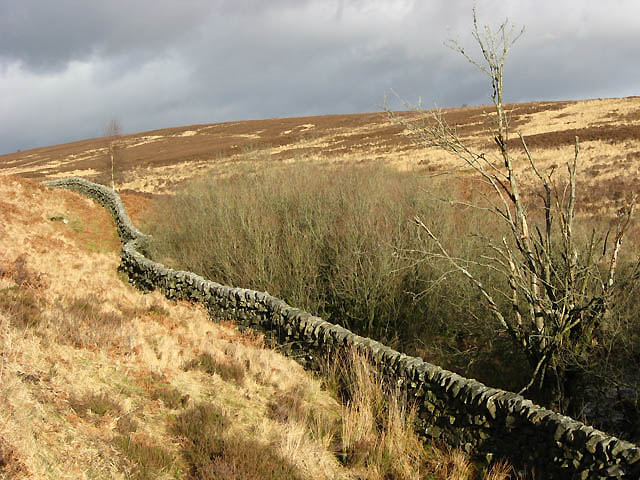 A drystane dyke near Little Tarras Water