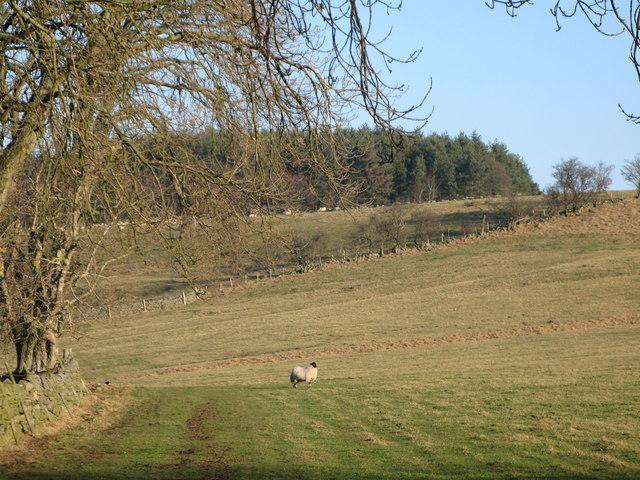 Pastures near Housty (3)