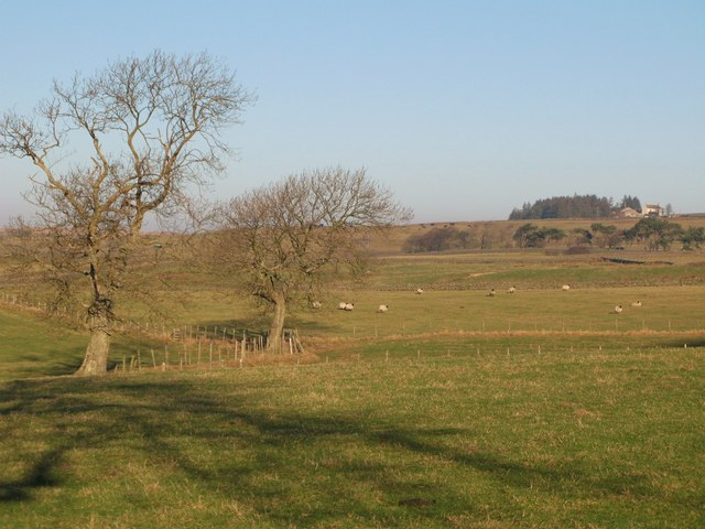 Pastures near Housty (4)