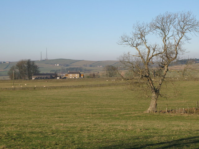 Pastures between Housty and Stone Stile