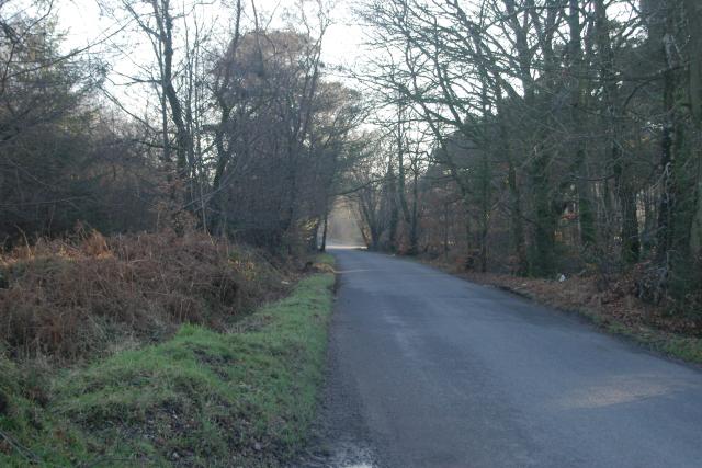 Woodland Road, Big Wood