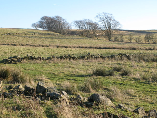 Pastures above The Hope