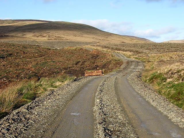 A forestry road on Ewe Rig