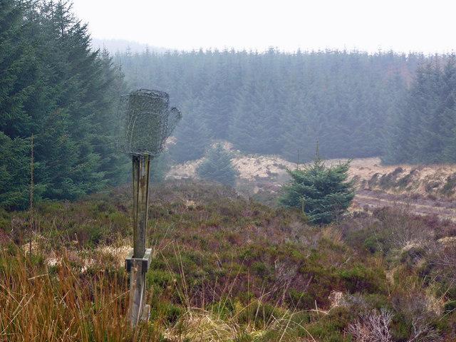 Firebeaters, forestry road near Milltim