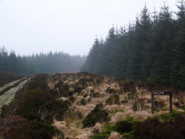 Forestry road near Milltim