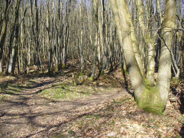 In Hurthill Copse