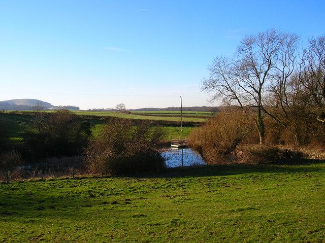 Pond near Whitelands