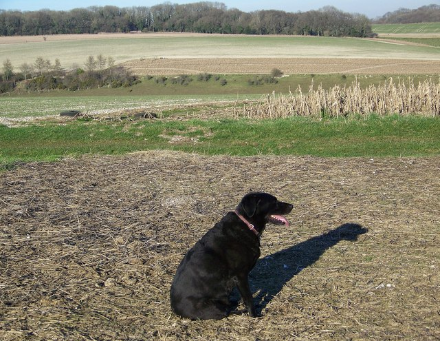 Me and my shadow on Fifield Down