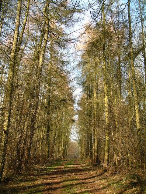Burwell Wood
