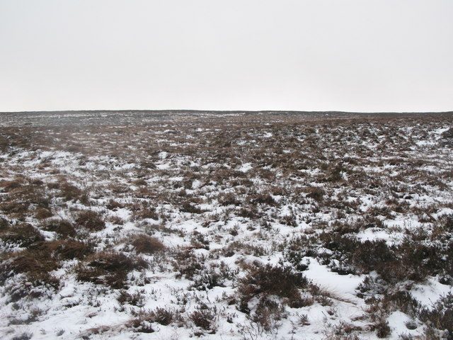 Wolfcleugh Common (4)
