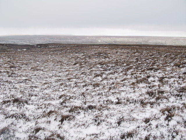 Wolfcleugh Common (5)