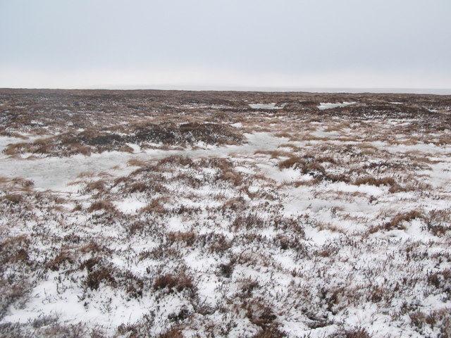 Wolfcleugh Common (2)