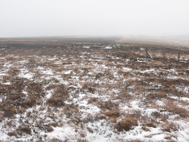 Wolfcleugh Common above North Grains