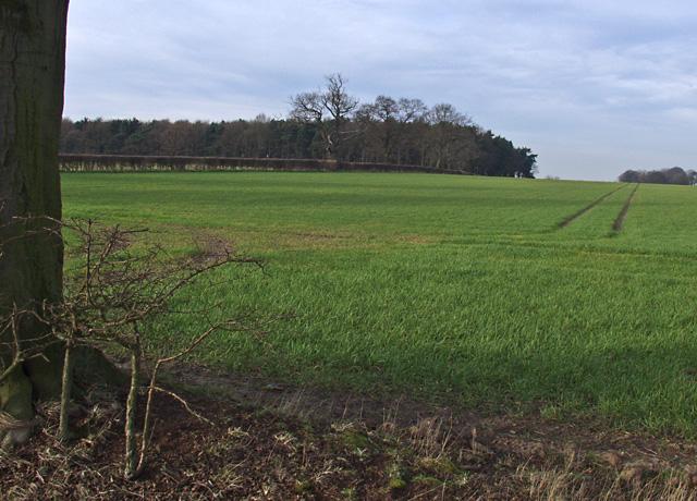 Tom Fisher Plantation, near South Dalton