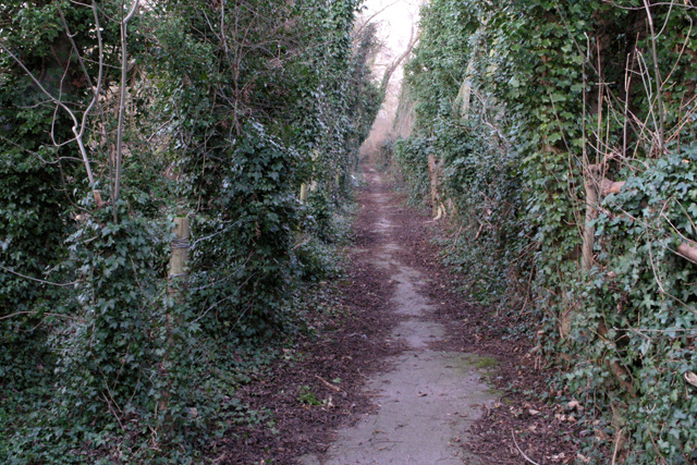 The path round Forbes Hole local nature reserve