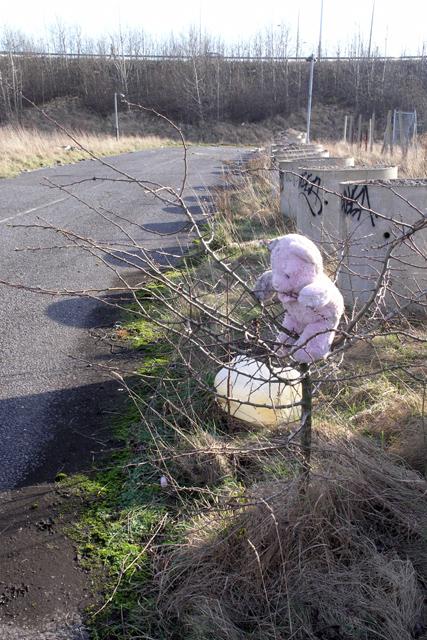 Pink teddy in a hawthorn