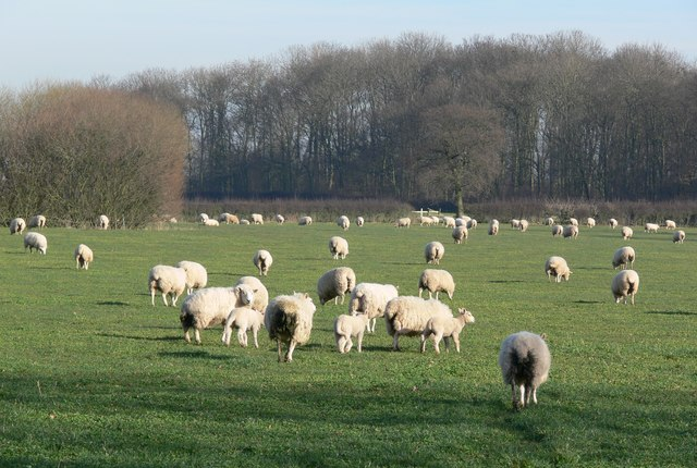 The first lambs of 2008
