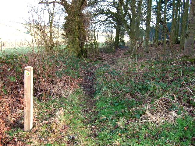 Footpath through the wood