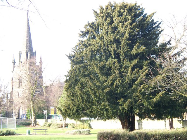 Yew Tree and All Saints